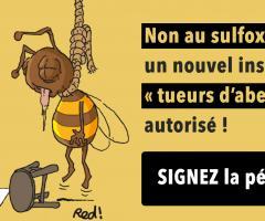 Non au sulfoxaflor, un nouvel insecticide « tueurs d'abeilles » autorisé !